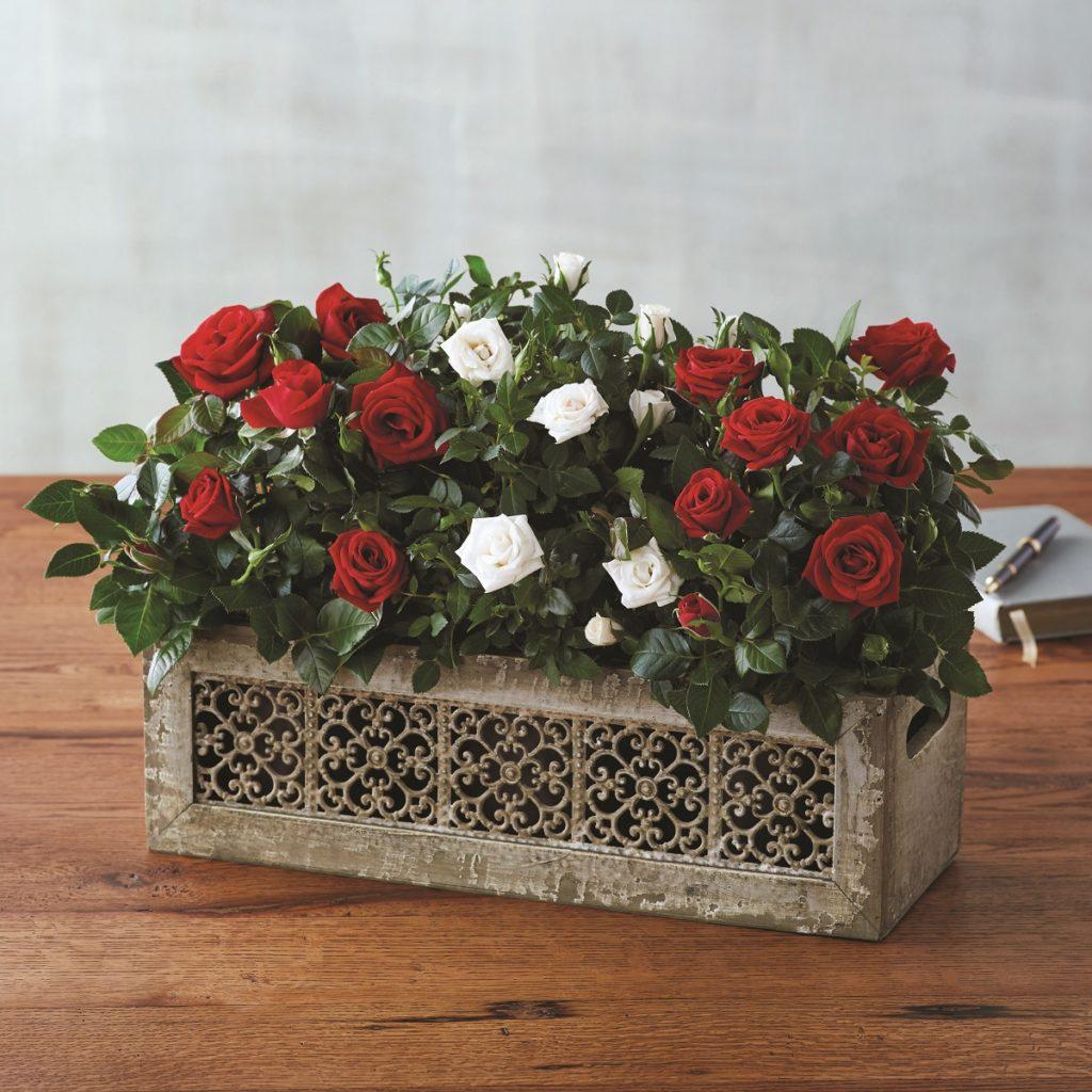 Christmas Roses Decoration