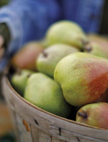 Basket of Royal Riviera Pears