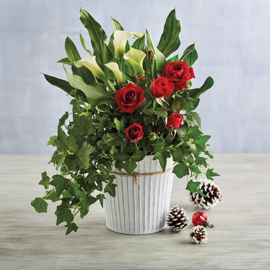 plant gift under 50