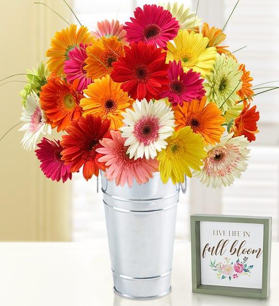 happy gerbera daisies
