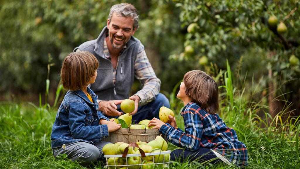 Grandparents day image - grandparents and grandchildren picking pears